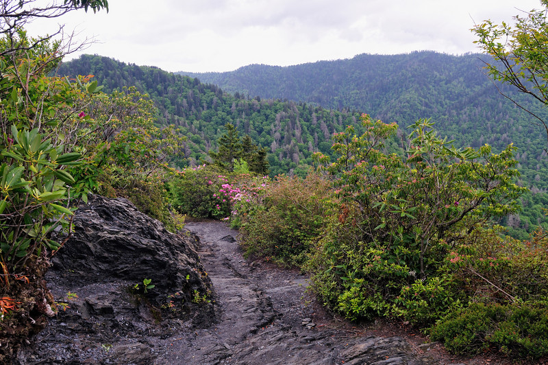 Alum Bluffs Hike - Smoky Mountains