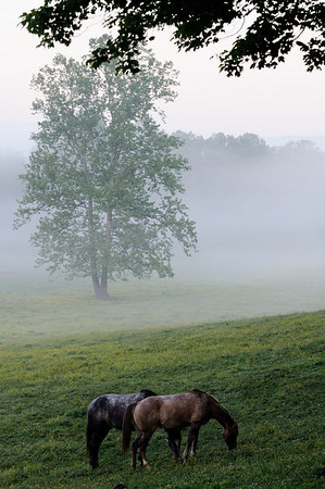 Horses in Cades Cove - Great Smoky Mountains National Park