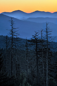Dead Spruce Firs - Clingmans Dome - Great Smoky Mountains National Park