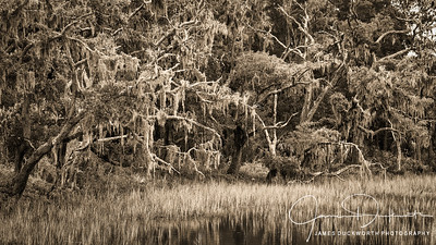 Lowcountry Salt Marsh