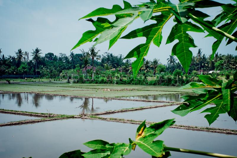 Bali Feb 2014 (22 of 148).jpg