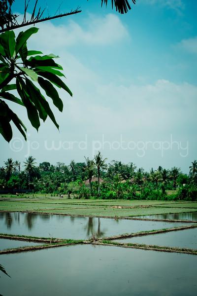 Bali Feb 2014 (20 of 148).jpg