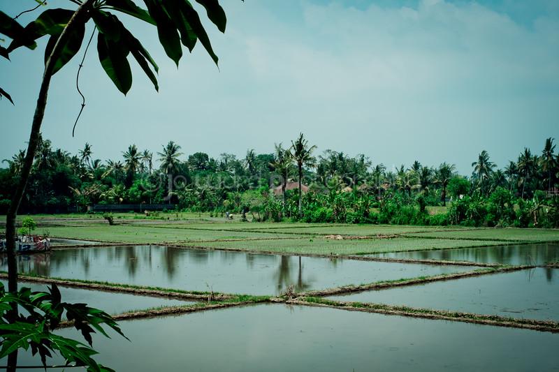 Bali Feb 2014 (19 of 148).jpg