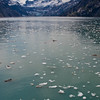 Icebergs floating in Glacier Bay National Park on the West Coast of Alaska above the Inside Passage.