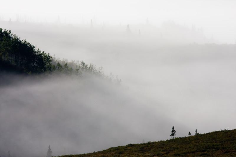 Early Morning Mist and Fog in Denali National Park in Alaska.