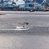 Seaplane in Vancouver Harbor in Vancouver, British Columbia, Canada.