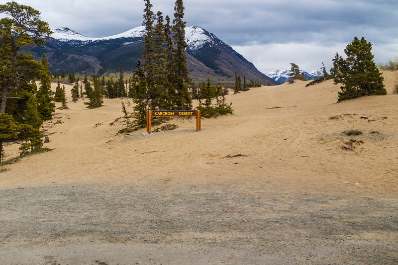 Carcross Desert is commonly referred to as a desert, but is actually a series of northern sand dunes. The area's climate is too humid to be considered a true desert. The sand was formed during the last ice age, when large glacial lakes formed and deposited silt. When the lakes dried, the dunes were left behind. Today, sand comes mainly from nearby Bennett Lake, carried by wind.