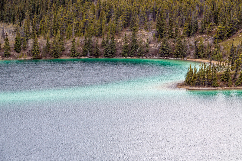 Emerald Lake near Carcross in Yukon Territory, Canada. The green color is the result of sunlight reflecting off of, what is called, marl. Marl is the white calcium carbonate that settles on the lake floor. It is created by mixing the limestone remains from the ice age with the calcium in the alpine water.