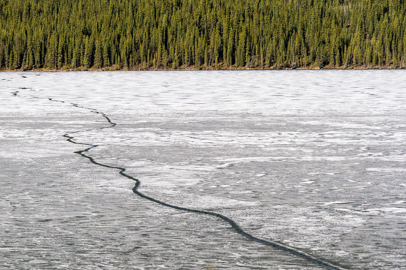 Fox Lake on the Yukon River in Yukon Territory, Canada, is just beginning to thaw in the last week of May. It is still mostly frozen.