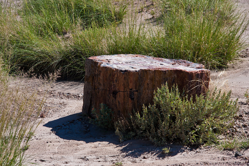 Petrified logs in the Crystal Forest area of Petrified Forest National Park in Arizona. Over more than 200 million years have passed since these crystalized logs were living trees.