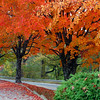 Autumn in Arkansas - Maple trees in full color on Highway 62 through Eureka Springs, Arkansas.