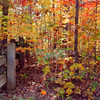 Autumn in Arkansas, colorful fall color scenes along rural roads in National Forest.