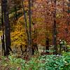 Autumn Foliage in the Ozark Mountains in Arkansas.