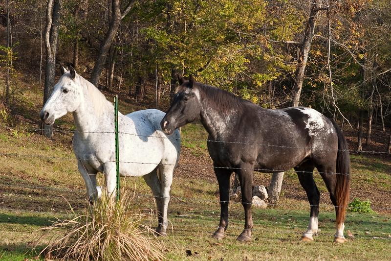 Horses at farm in the Ozark Mountains in Arkansas.