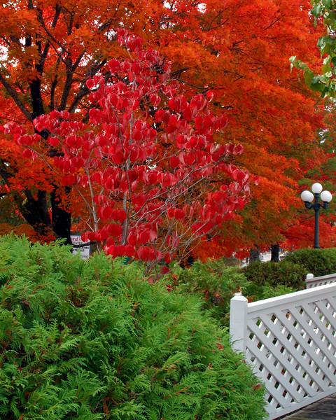 Autumn in Arkansas - Maple trees in full color on Highway 62 through Eureka Springs, Arkansas.