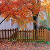 Autumn color at home in Eureka Springs, Arkansas.