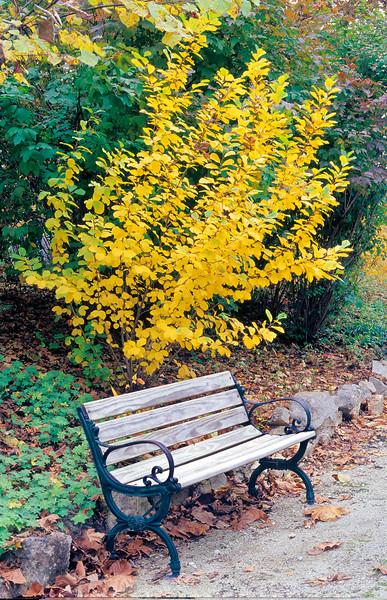 Autumn in Arkansas. Bench at Eurkeka Springs Gardens.