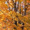 Autumn Color in Eureka Springs, Arkansas.
