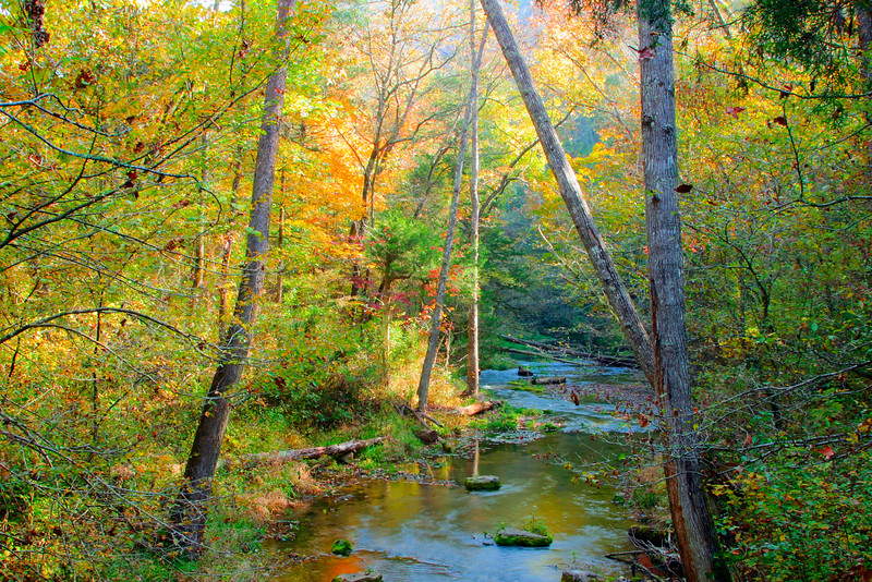 Autumn in Arkansas - Fall colored leaves and trees in front of Blanchard Springs Lake in Arkansas.