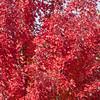Autumn Color in Branson, Missouri.