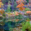 Autumn in Arkansas, colorful trees and leaves at Eureka Springs Gardens off of Highway 62.
