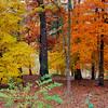 Autumn color in Arkansas at Eureka Springs Gardens.