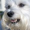 Mandie, dog belonging to Joyce Chase.