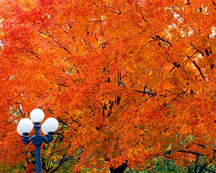 Autumn color in Arkansas in Eureka Springs.