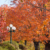 Autumn Color in Eureka Springs, Arkansas.