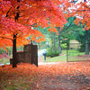 Autumn Color with Maple trees in Eureka Springs, Arkansas.