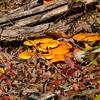 Mushrooms in the Ozark Mountains in Arkansas.