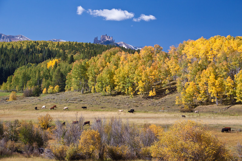 Farms and Ranches showing autumn color with Aspens turning - along the Ohio Pass road between Gunnison and Crested Butte, Colorado. The summit of Ohio Pass is 10076 feet and much of the road is unpaved and is closed in winter. The Castles mountain range is in the distance.