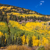"""Autumn color in Aspen trees along US 550 between Durango and Silverton, part of the scenic drive known as the """"Million Dollar Highway."""""""