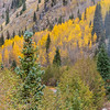 Durango and Silverton Narrow Gauge Railroad tourist train ride in autumn through the San Juan Mountains and the San Juan National Forest.