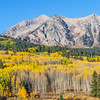 Autumn color on Kebler Pass Road in Colorado in late September.