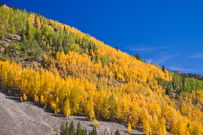 "Autumn color with Aspen tree leaves turning yellow and orange on US 550, the ""Million Dollar Highway,"" in Colorado. This part of US 550 is included in the San Juan Skyway Scenic Byway in southwestern Colorado, passing through the San Juan Mountains."