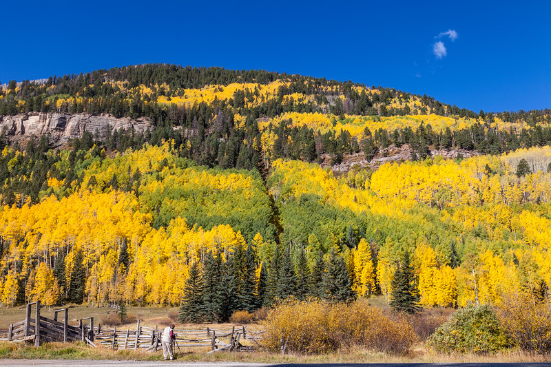 "Photographer capturing autumn color in Aspen trees along US 550 between Durango and Silverton, part of the scenic drive known as the ""Million Dollar Highway."""
