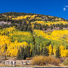 """Photographer capturing autumn color in Aspen trees along US 550 between Durango and Silverton, part of the scenic drive known as the """"Million Dollar Highway."""""""