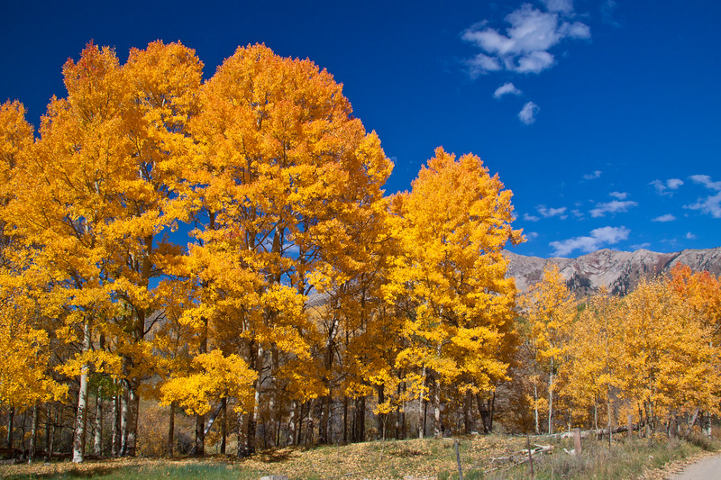 Autumn color with Aspens turning - along the Ohio Pass road between Gunnison and Crested Butte, Colorado. The summit of Ohio Pass is 10076 feet and much of the road is unpaved and is closed in winter.