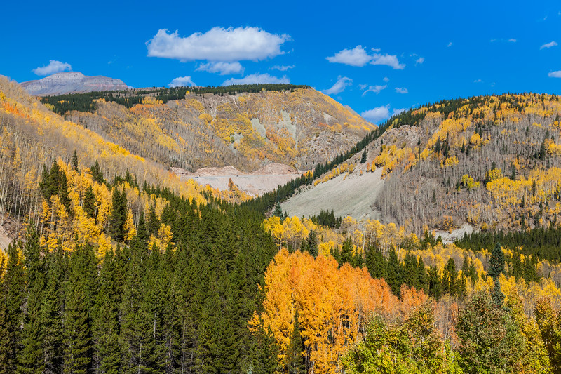 "Autumn color in Aspen trees along US 550 at the site of the historic ""Lime Creek Burn"" between Durango and Silverton, part of the scenic drive known as the ""Million Dollar Highway."""