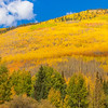 Aspen trees and autumn color along the US 550 portion of the San Juan Skyway between Ridgway and Silverton Colorado.