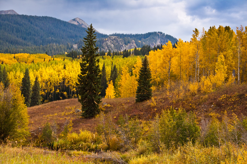 Autumn Color with Aspens turning - on Kebler Pass road (officially named GCR12 or Gunnison County Road 12) west of Crested Butte, Colorado.  The summit of Kebler Pass is 10007 feet and most of the road is dirt and is closed in winter.