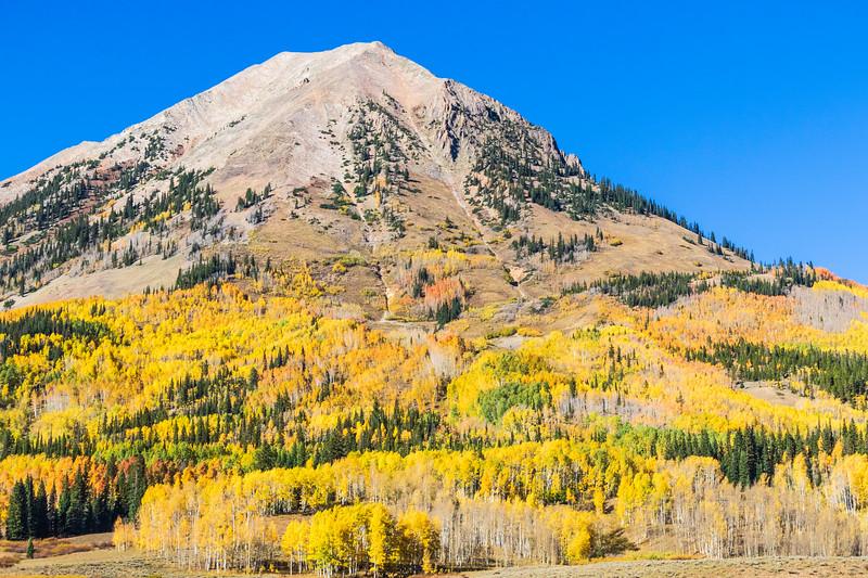 Autumn color along Washington Gulch Road near Crested Butte Colorado.