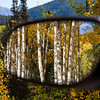 Reflections in Mirror of autumn color with Aspens turning - along the Ohio Pass road between Gunnison and Crested Butte, Colorado. The summit of Ohio Pass is 10076 feet and much of the road is unpaved and is closed in winter.