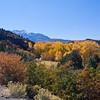Autumn color on County Road 7 near Ridgeway, Colorado.
