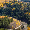 """Autumn color in Aspen trees along US 550 at the site of the historic """"Lime Creek Burn"""" between Durango and Silverton, part of the scenic drive known as the """"Million Dollar Highway."""""""