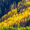 Autumn Color along the Ohio Pass Road in Colorado