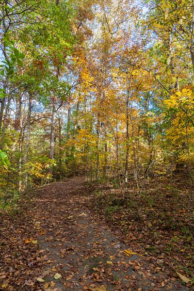 Fall color in park in Concord Covered Bridge Historic District in Smyrna, Georgia.