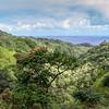 African Tulip tree, Spathodea Campanulata, a very invasive species, as well as Candlenut tree or Kukui tree, Aleurites Moluccana, growing along the Road to Hana on Maui in Hawaii.