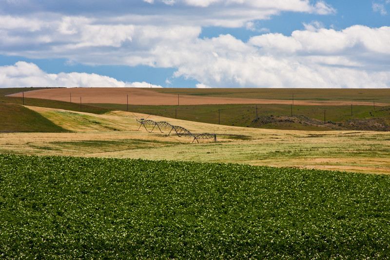 Potato farming in eastern Idaho. Extensive irrigation is required for farming in Idaho, so the rivers determine where farming is possible. In eastern Idaho, the primary river providing irrigation is the Snake River and its tributaries. Southeastern Idaho is home to the single largest potato-producing region in the United States. Over 30% of all United States potatoes originate from here. For Idaho, the crop is a boon to their economy in that it makes up approximately 15% of the gross state sales. The root of the potato is an important food, but the leaves of the potato plant are toxic.
